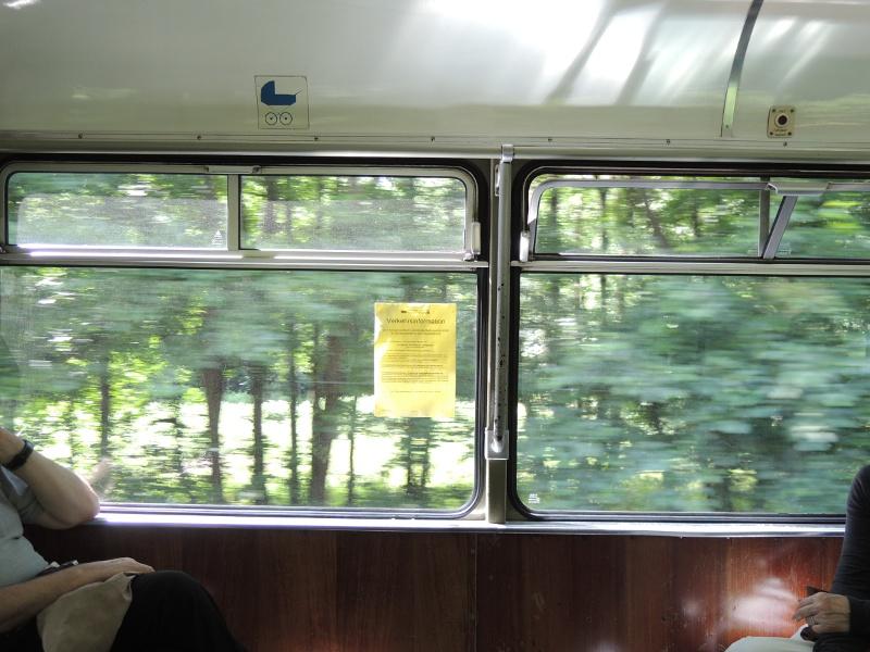 Wald, von der Thüringerwaldbahn aus gesehen