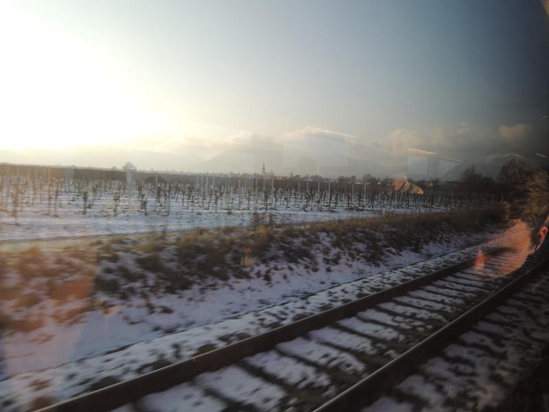 verschneite Weinberge an der Pfälzer Weinstraße